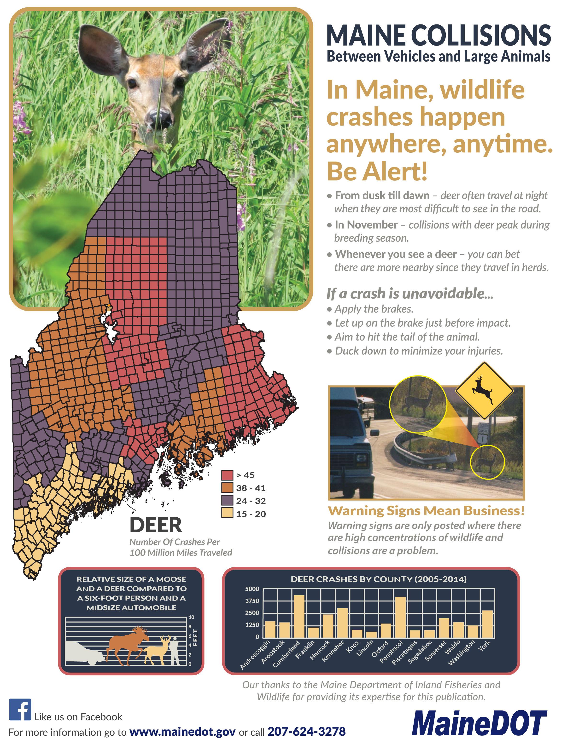 In Maine November is Deer Collision Month! | Northeast ...